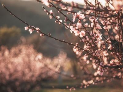 Jarný relax